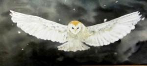 cropped-barn_owl_hunting_under_the_stars_2.jpg