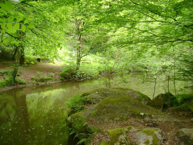 Forêt de Rochechouart - 1